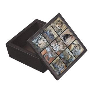 Cheetah Cubs -- Animal Babies Gift Box