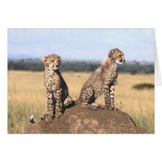 Cheetah Cubs Card