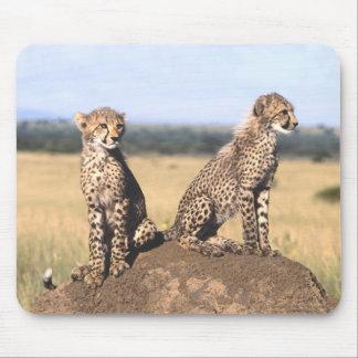 Cheetah Cubs Mousepad Mousepad