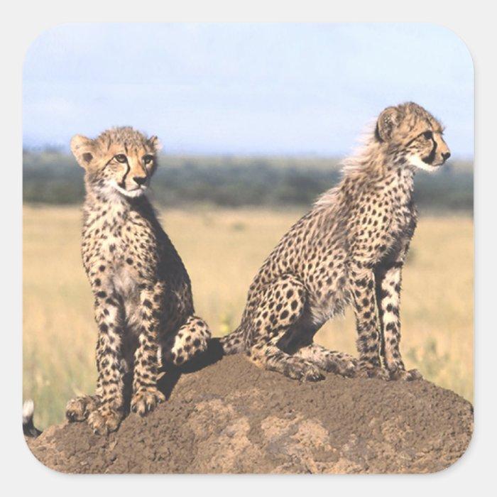 Cheetah Cubs Square Sticker