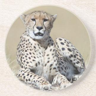 Cheetah Drink Coaster