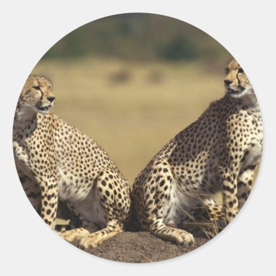 Cheetah Duo Classic Round Sticker