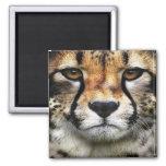 Cheetah Face Magnet