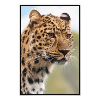 Cheetah Face Photo Print