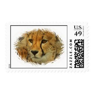 Cheetah Face Postage Stamp