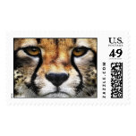 Cheetah Face Postage Stamps