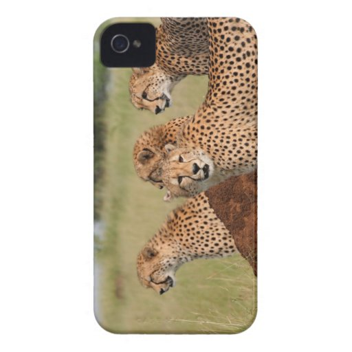 Cheetah Family iPhone 4 Case