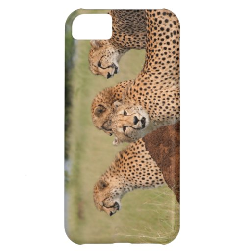 Cheetah Family iPhone 5C Cases