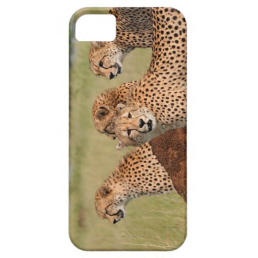 Cheetah Family iPhone 5 Cases