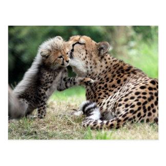 Cheetah female & Cub Postcard