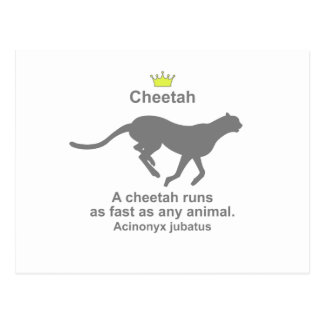 Cheetah g5 postcards