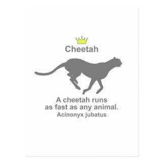 Cheetah g5 postcard