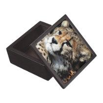 Cheetah Gift Box