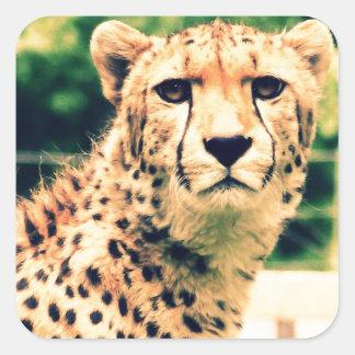 Cheetah glare square sticker