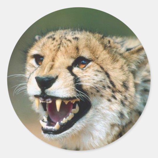 Cheetah Growl Classic Round Sticker