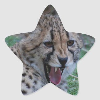 Cheetah Growl Star Stickers