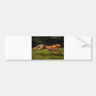 Cheetah Hunting His Prey Bumper Sticker