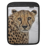 Cheetah in Snow Close Up Sleeves For iPads
