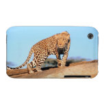 Cheetah iPhone 3 Case-Mate Cases