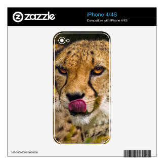 Cheetah iPhone 4/4S Skin Decal For The iPhone 4S