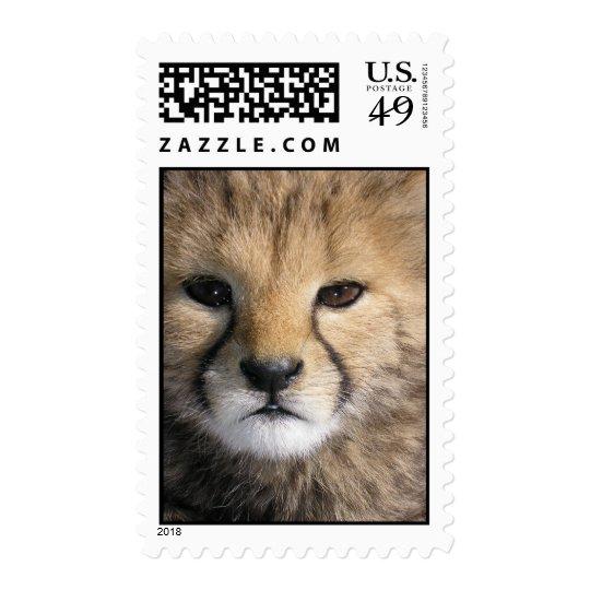 Cheetah-Jamar Postage
