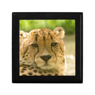 Cheetah Jewelry Box
