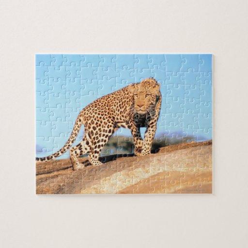 Cheetah Jigsaw Puzzles