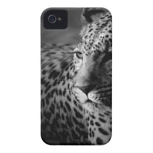 cheetah.jpg Case-Mate iPhone 4 case