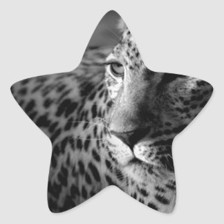cheetah.jpg star sticker
