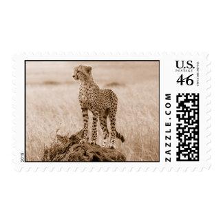 cheetah kenya africa postage stamps
