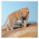 Cheetah Large Square Tile