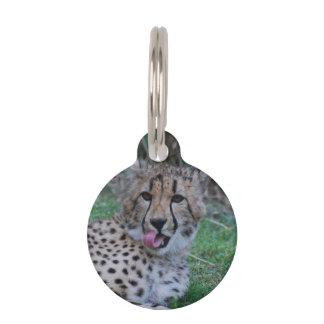 Cheetah Licking His Chops Pet ID Tag