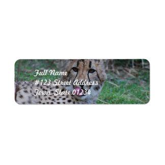 Cheetah Licking His Chops Return Address Labels