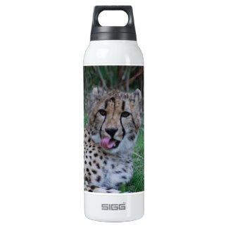 Cheetah Licking His Chops 16 Oz Insulated SIGG Thermos Water Bottle