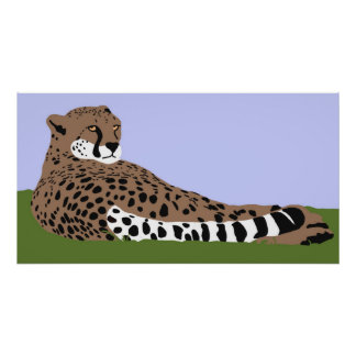 cheetah looking and down poster