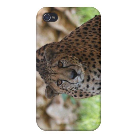 Cheetah Looking at his Prey iPhone 4 Case