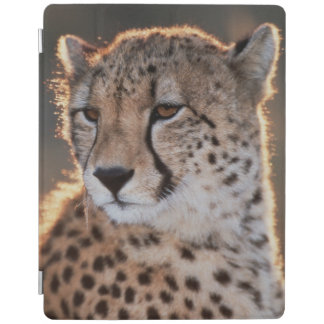 Cheetah looking away iPad smart cover