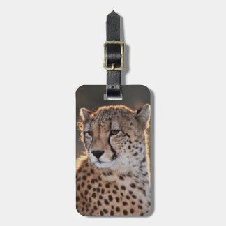 Cheetah looking away luggage tag