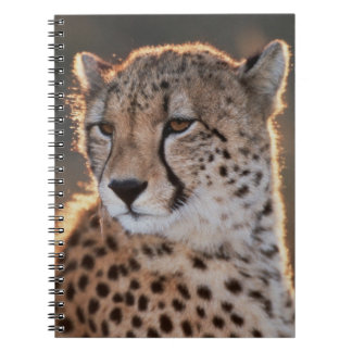 Cheetah looking away notebooks