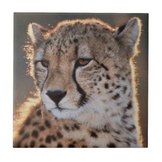 Cheetah looking away tile