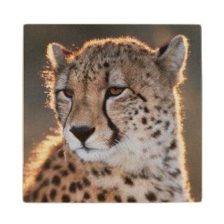 Cheetah looking away wooden coaster