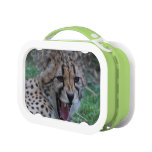 Cheetah Lunch Boxes