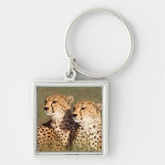 Cheetah Lying In Grass, Ngorongoro Conservation Keychain