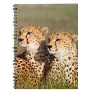 Cheetah Lying In Grass, Ngorongoro Conservation Notebook