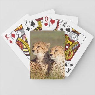 Cheetah Lying In Grass, Ngorongoro Conservation Playing Cards