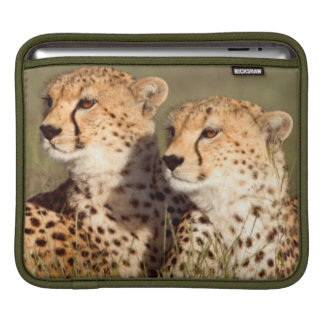 Cheetah Lying In Grass, Ngorongoro Conservation Sleeve For iPads