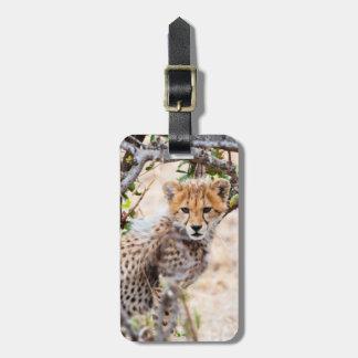 Cheetah, Maasai Mara National Reserve Tag For Luggage