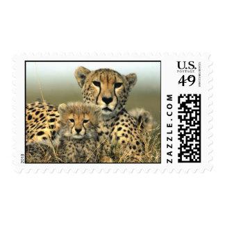 Cheetah Mom and Cub Postage