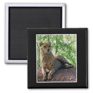Cheetah on a rock 2 inch square magnet