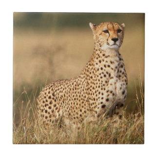 Cheetah on small mound for better visibility ceramic tile